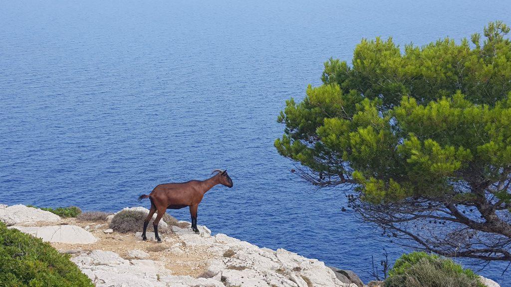 Cap Formentor Mallorca - på biltur