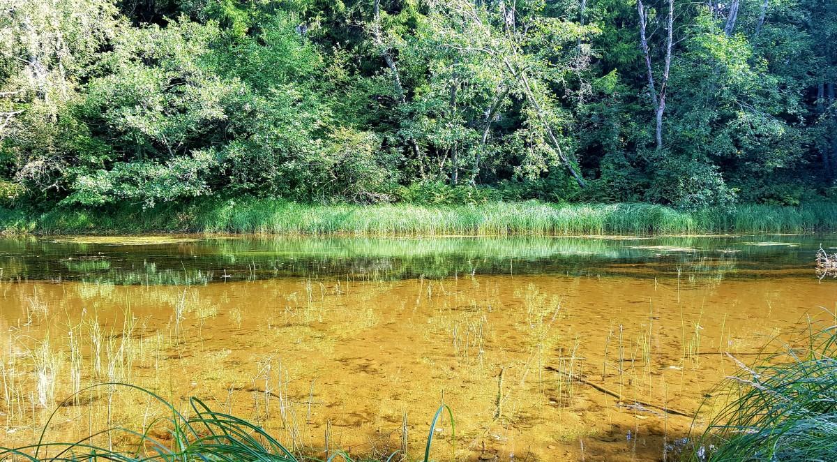 Elvestien i Larvik - klart brunt vann