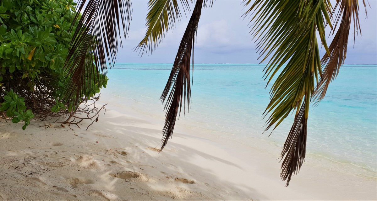 Palmer og strand på Maldivene