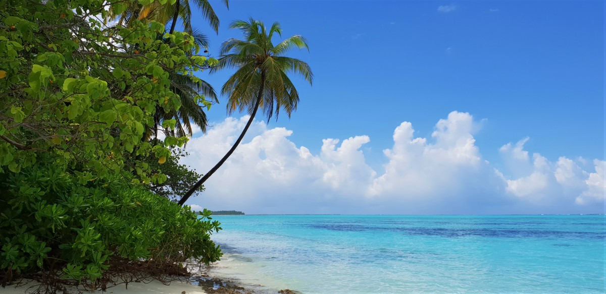 Maldivene - palmer og strand.