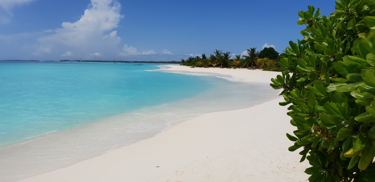 Hvite strender Sun Island Resort Maldivene