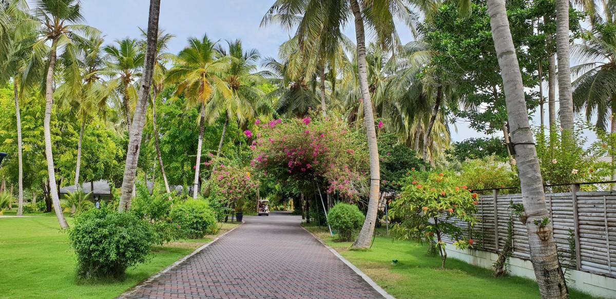 Parken på Sun Island Resort, Maldivene