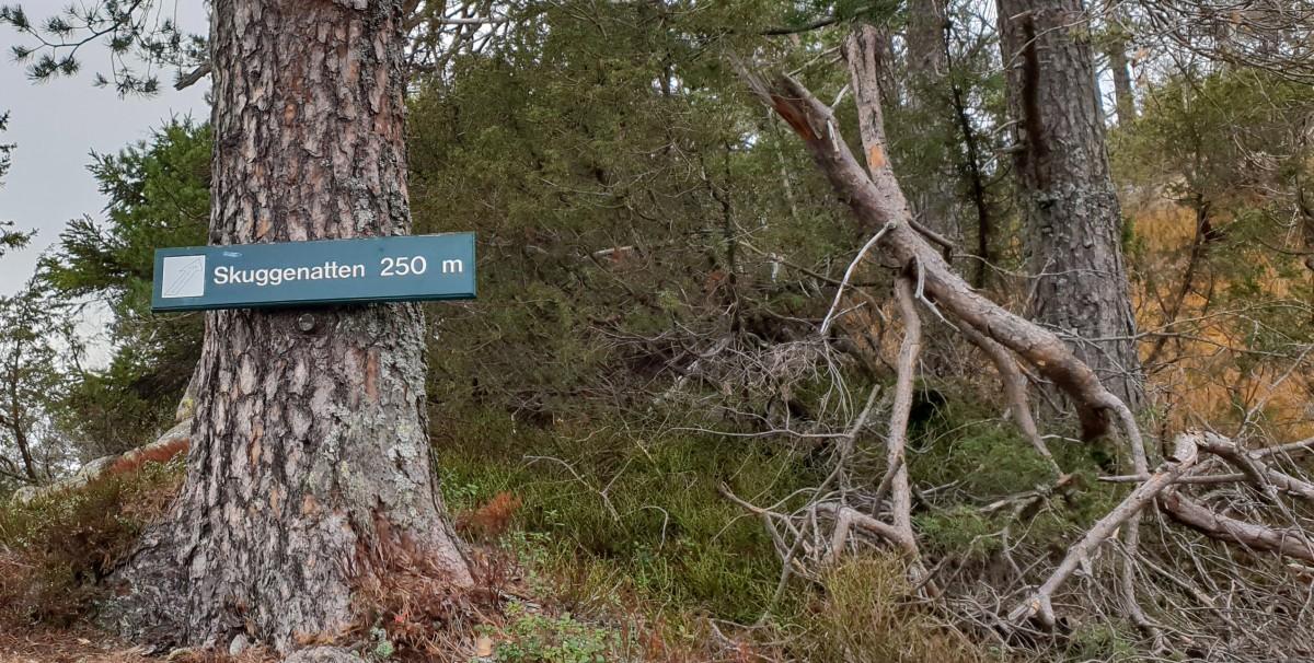Topptur til Skuggenatten